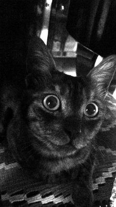 Cat. 18/06/2016  S.