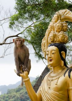 A monkey perched on one of the many buddhas at Ten Thousand Buddhas monastery, Hong Kong