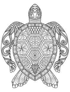 wood burning turtle pattern