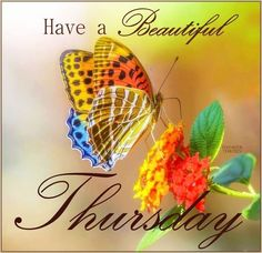 Have A Beautiful Thursday good morning thursday thursday quotes thursday pictures good morning thursday thursday quotes and sayings thursday images Good Morning Thursday Images, Sweet Good Morning Images, Happy Thursday Morning, Happy Thursday Quotes, Thursday Pictures, Good Thursday, Thursday Humor, Thankful Thursday, Good Morning Good Night