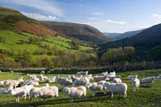 Welsh Sheep - Peter Adams/Getty Images