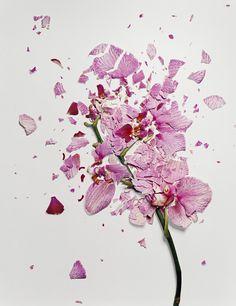 Flowers Soaked in Liquid Nitrogen Shatter on Impact (Jon Shireman)