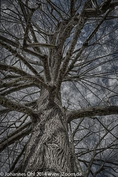 The Brain-Tree by Johannes Oehl on 500px . //  It looks like a brain. You can see the neural net. But it's a tree, which growing since a long time near to the castle Liebeneck (close to Pforzheim, Germany)