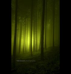 magical forest mist | Bill Hinton #photography | http://www.billhinton.com/