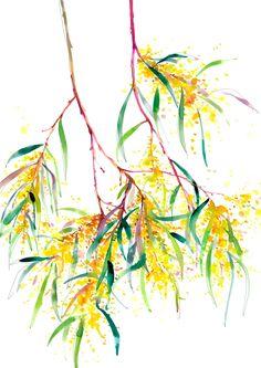 """Roadside Wattle"" is a fine art limited edition print on beautiful textured paper by Natalie Martin. Australian Wildflowers, Australian Native Flowers, Australian Animals, Watercolor And Ink, Watercolor Flowers, Watercolor Paintings, Watercolours, Natalie Martin, Ink Illustrations"