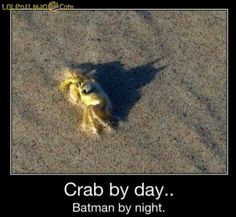 Crab by day..Batman by night
