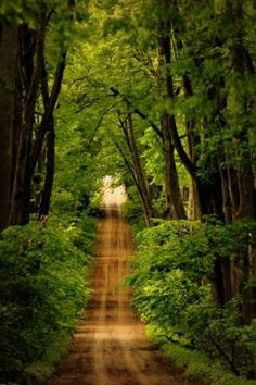 a well-traveled dirt road through a dense thicket of bushes and trees
