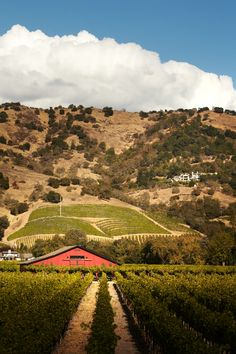 Stop by Tom Scott Vineyard in Yountville to take in the rolling blond hills of Northern #California.