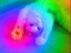 Insanely AMAZING rainbow cat! -Kate