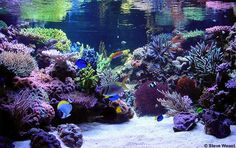 Have a giant saltwater fish tank and someone to take care of it for me!