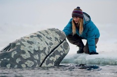 Save the whale in alaska