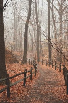 I can almost smell the leaves, the slight chill in the air, feel the mist on my face. Reminds me of my favorite trail in Mammoth Cave National Park, KY.