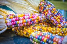 Glass Gem Corn - Multi colored corn. This is not painted or coloured. It grows like this!!! Looks too pretty to eat!