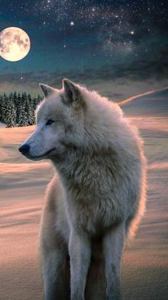 New Wolf Spirit Animal Art Full Moon Ideas Wallpaper Lobos, Wolf Wallpaper, Animal Wallpaper, Wolf Photos, Wolf Pictures, Beautiful Wolves, Animals Beautiful, Wolf Life, Wolf Spirit Animal