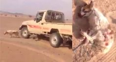 PETITION, PLEASE SIGN AND SHARE! Justice for helpless dog run over on purpose by driver in Saudi Desert! Animal Petitions by YouSignAnimals.org.