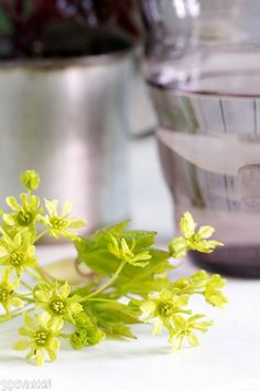 Näin sisustat kukkaoksilla   Kotivinkki Planting Flowers, Anna, Herbs, Plants, Herb, Plant, Planets, Medicinal Plants