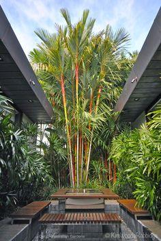 Struthers©KimWoodsRabbidge-Our-Auastralian-Gardens