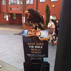 While participating in public witnessing today near a university in Sheffield, England. The university had an open day and the zoology department had a display with a Harris Hawk.