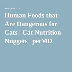 Human Foods that Are Dangerous for Cats | Cat Nutrition Nuggets | petMD