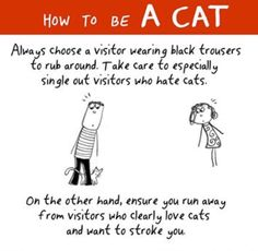 HOW TO BE A CAT: Always choose a visitor wearing black trousers to rub around. Take care to especially single out visitors who hate cats. On the other hand, ensure you run away from visitors who clearly love cats and want to stroke you. Hate Cats, I Love Cats, Crazy Cat Lady, Crazy Cats, Funny Cartoons, Funny Cats, How To Cat, Cat Comics, Like A Cat