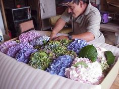 How to DIY hydrangea bouquets.