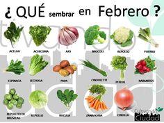 Enjoy Your Own Organic Produce With These Tips Eco Garden, Edible Garden, Garden Plants, Indoor Plants, Garden Tools, Organic Gardening, Gardening Tips, Bonsai, Different Vegetables