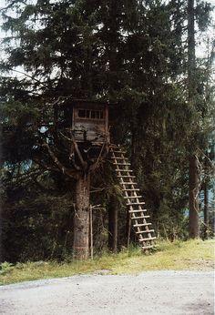 log ladder