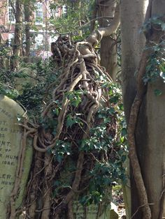 Highgate east cemetery, London-- when nature reclaims it's territory.
