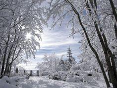 Winter Scenery I love snow Winter Szenen, I Love Winter, Winter Magic, Winter Colors, Winter Christmas, Christmas Morning, Winter White, Snow White, Winter Light