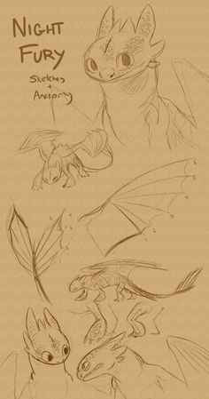 just some sketches and stuff i like to keep in mind when im drawing toothless ive spend way too much time studying his anatomy
