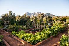 a shoot at babylonstoren for delicious magazine with martin boetz Babylonstoren, Franschhoek, South Africa Eco Garden, Edible Garden, Dream Garden, Small Backyard Gardens, Farm Gardens, Outdoor Gardens, Delicious Magazine, Organic Farming, Best Location