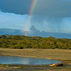 Southern Serengeti (Ndutu), Tanzania, sleepy lion (www.ebensafaris.com)