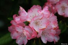 Flower 90 by Mohammad Azam