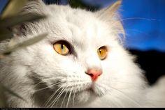 Cat / Source / Photo: Moyan_Brenn (cute animals)