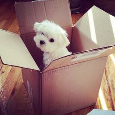 Nothin cuter than a puppy in a box