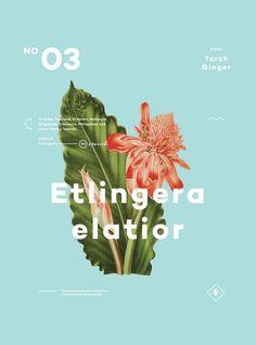 A Few Plants poster by artist Ben Biondo