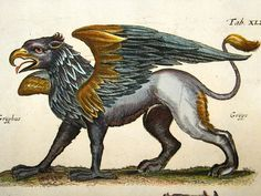 Antique Folio Copper Plate Published 1718 in Amsterdam.Illustrated by Caspar and Matthias Merian Medieval Art, Fantasy Art, Bestiary, Mythical Creatures, Art, Mythology, Fantastic Beasts, Prints, Mythical Beast