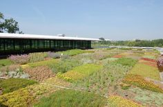 this quilt-like green roof at the Chicago Botanic Garden by Oehme, van Sweden & Associates.