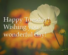 pinterest happy tuesday | Happy Tuesday Pictures, Photos, and Images for Facebook, Tumblr ...