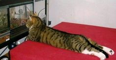 20wonderfully lazy cats who've achieved total relaxation