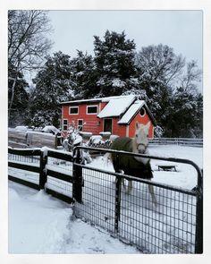 #tinyhome #tinyhomes #tinyhouse #tinyhouses #tinyhousenation #tinyhousemovement #snow #snowday #snowing #nature #nashville #tennessee #Marra #mare #arabian #arabianhorse #arabianhorses #horse #horses #horsesofinstagram #ilovemypony #ilovemyhorse by jmdroguedancer