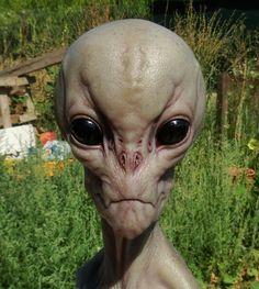 Alien (Grey) books and movies Les Aliens, Aliens And Ufos, Ancient Aliens, Alien Gris, Grey Alien, Alien Pictures, Alien Photos, Alien Concept Art, Alien Abduction