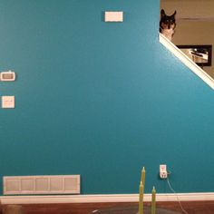 Teal wall- maybe this color in the kitchen...?