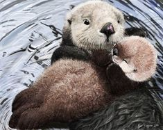 Sea otter mom's soft lullaby by Psithyrus (Blair Sampson)