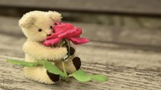 Happy Teddy Day is the most lovely day for Valentines Week. This is the day you can see the teddy bear while walking on the road, not really. During Teddy Day Happy Teddy Day Images, Happy Teddy Bear Day, Teddy Bear Images, Teddy Bear Gifts, Teddy Bear Pictures, Cute Teddy Bears, Teddy Toys, Cute Birthday Wishes, Birthday Wishes For Girlfriend