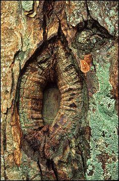 Tree Bark by kimbenson45, via Flickr