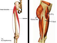 Tensor fascia lata Fascia Lata, Tensor Fasciae Latae, It Band, Image, Yoga, Nursing Students, Human Anatomy, Runners, Stretches