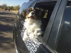 underPAWS Magnetic Car Door Protector - Protect your car, SUV, truck door paint from scratches and scrapes as your dog enjoys the fresh air and scenery during the ride. Comes in multiple designs and colors.