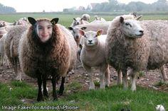 To jest owca Weronika
