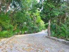 La civilización se abre camino entre las selvas, bosques y parques, para que puedas recorrer, como por este sendero, las hermosas maravillas que la flora y la fauna de #Mexico muestran. http://www.bestday.com.mx/Ofertas/